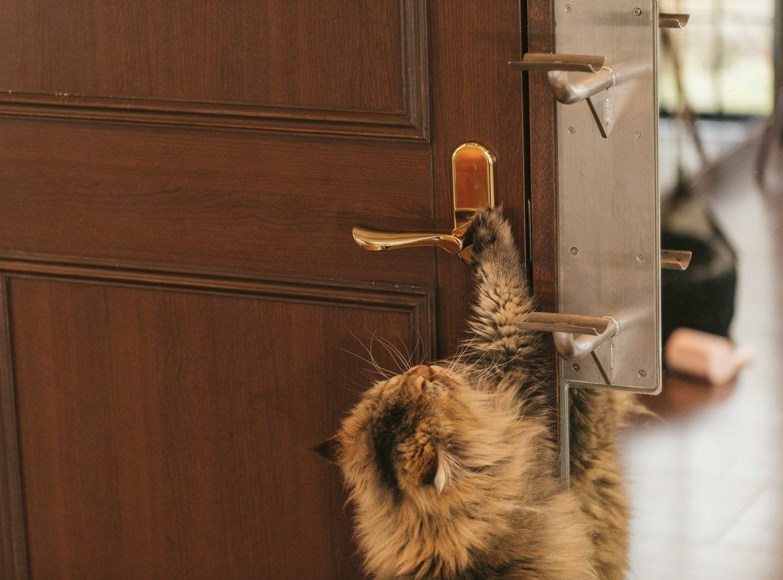 【心の断捨離】掃除と片づけ(まずは玄関から!編)